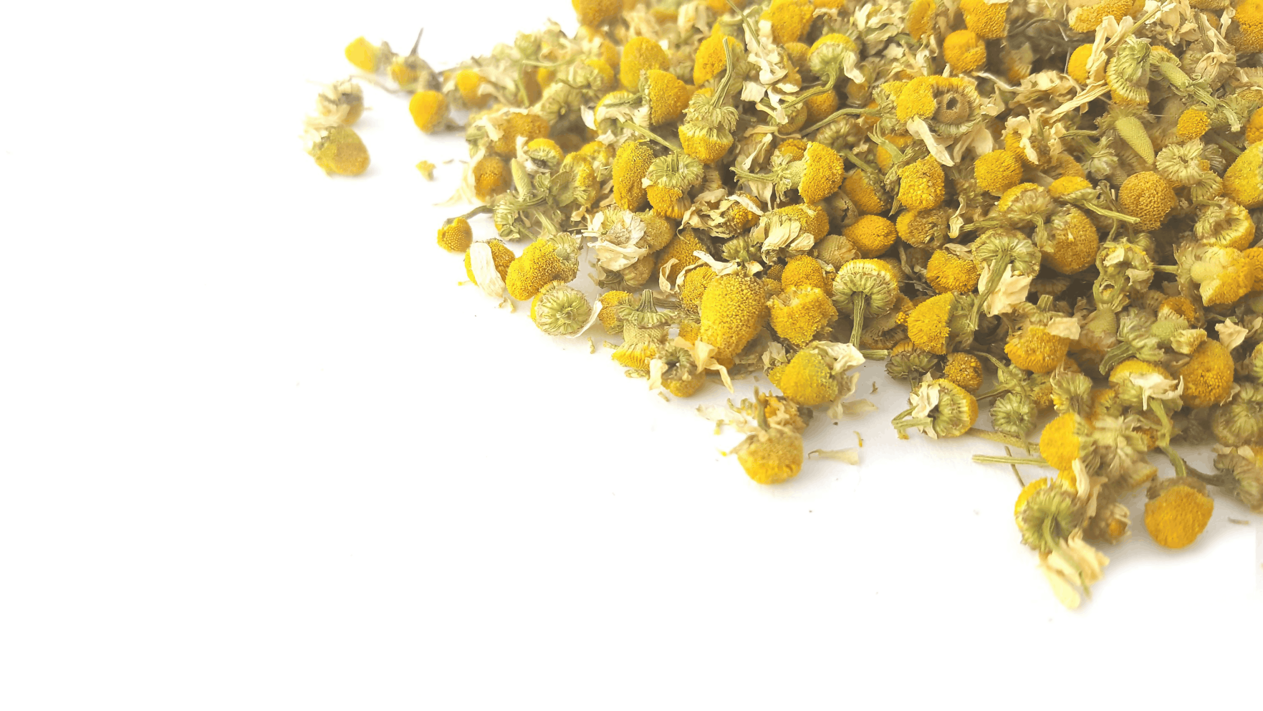 Chamomile is the Buzz