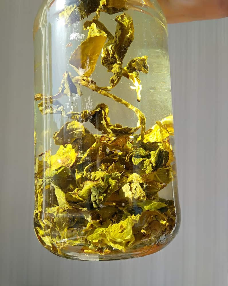 Organic Cold Brew Chinese oolong tea TieGuanYin