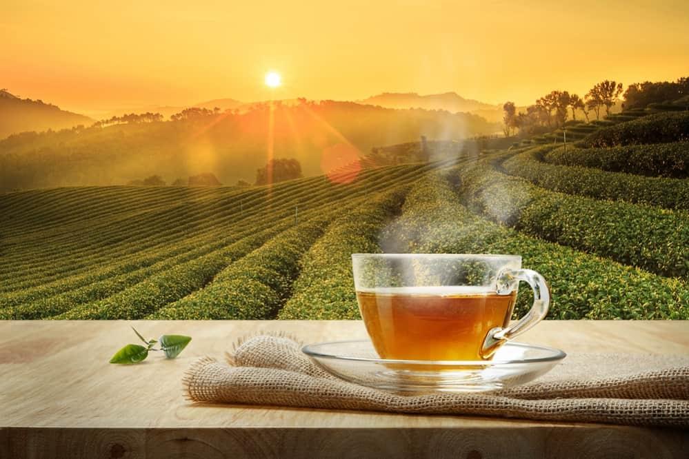 Black Tea vs. Green Tea