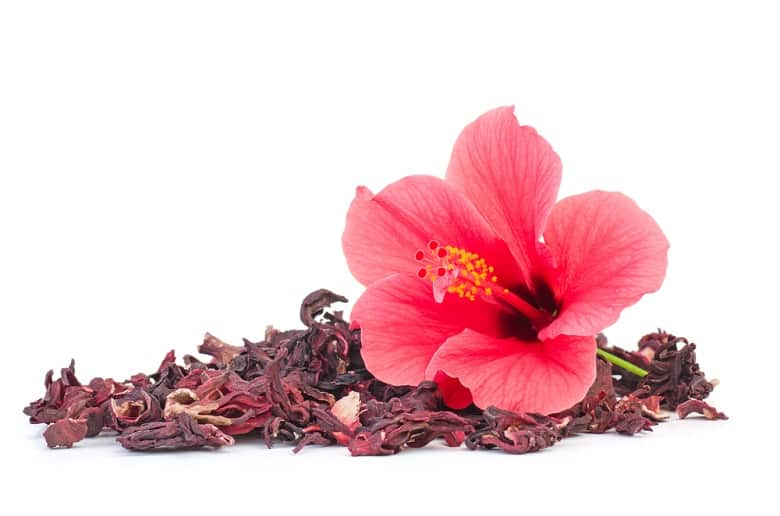 Fresh and dried hibiscus flowers